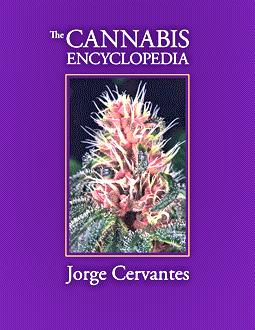 New Cannabis Encyclopedia Immediately Useful