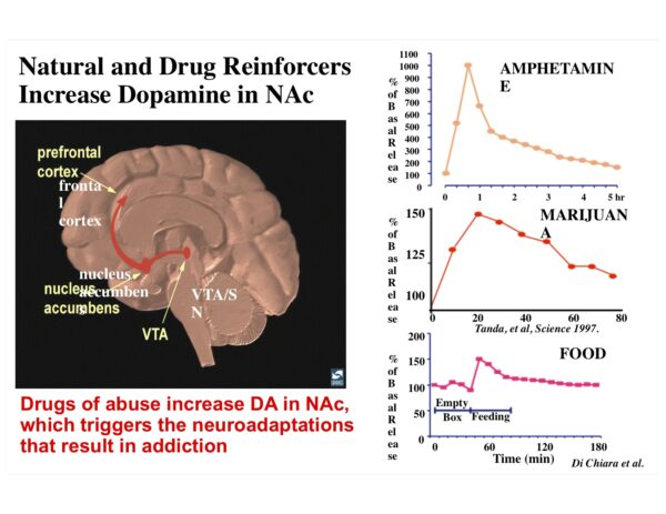 increased dopamine in NAc