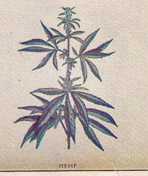 'Poisonous Plants'