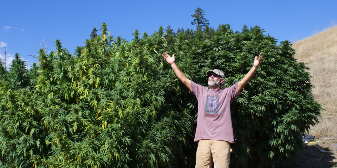 Delegalized: 'Collective' and 'Cooperative' Cultivation in California