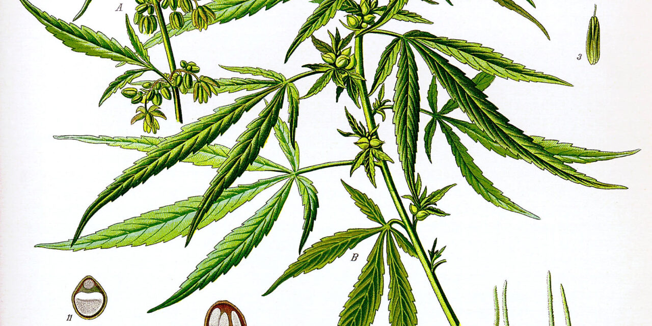 Was Cannabis First Grown in Eastern China?
