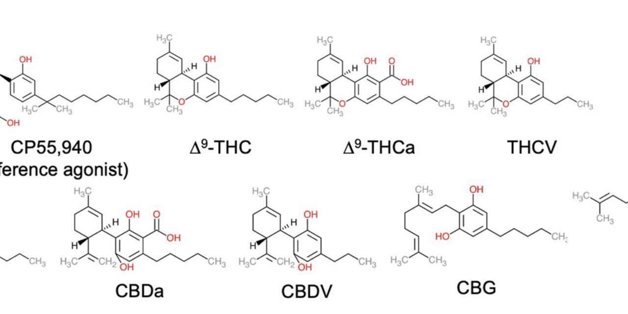 Activity of 9 Cannabinoids Measured